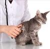 Ветеринарные клиники в Чагоде